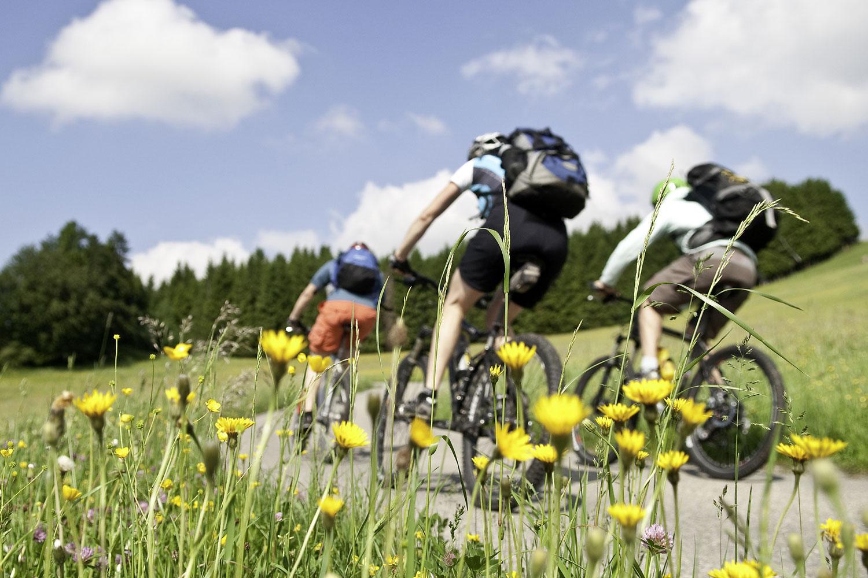Gruppe von Radfahrer fahren an Blumenwiesen vorbei